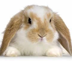 coniglio-amico