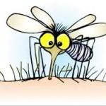 Stop alle zanzare: ecco come dire addio alle loro punture